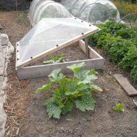 Growshop Set Growbox Pflanzenzucht